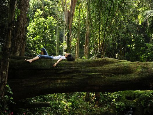 Forest Bathing - Time to Rethink your Relationship with Nature, 13 March | Event in Shellharbour City Centre