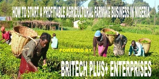 HOW TO START A PROFITABLE SMALL SCALE AGRICULTURAL FARMING IN NIGERIA