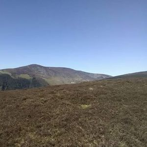Camaderry Mountain & Turlough Hill Guided Hike