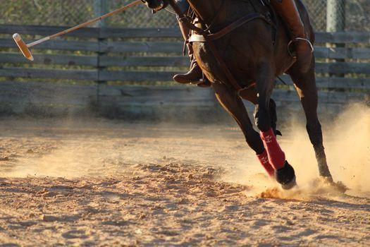 Tamarian Tuesdays- Beginner Polo