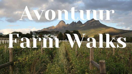 Avontuur Farm Walks, 26 June | Event in Somerset West | AllEvents.in