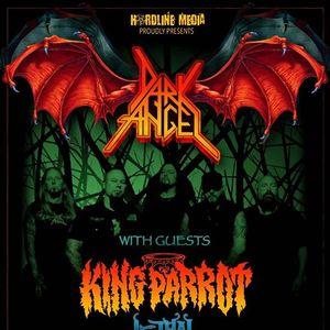 Dark Angel  King Parrot - Sydney - Manning