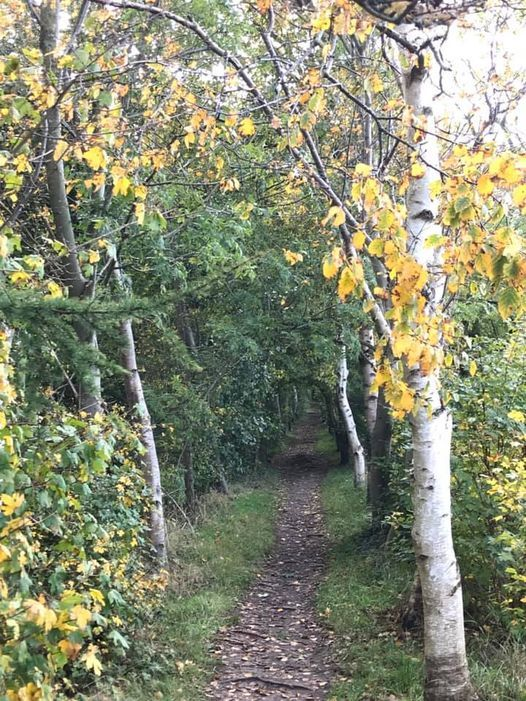 Wellbeing Walk (£5), 27 November | Event in Doncaster | AllEvents.in