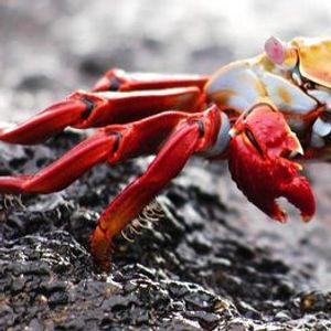 Virtual Tour of the Galapagos Islands