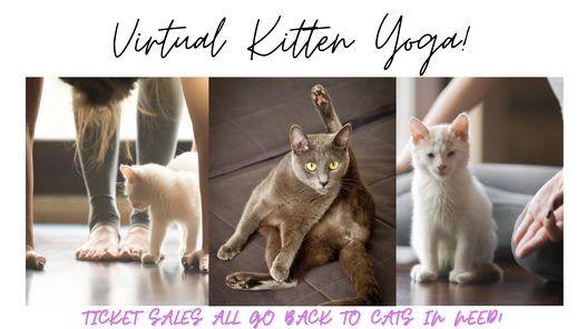 Virtual Kitten Yoga | Online Event | AllEvents.in