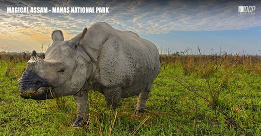 Magical Assam, Manas National Park - November 2020, 16 November | Event in Rangia | AllEvents.in