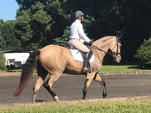 Top Hat Training dressage show, 9 May | Event in Hillcrest | AllEvents.in