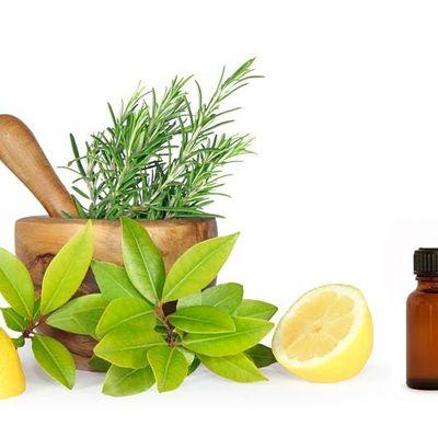 Herbal Medicine for Aromatherapists