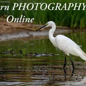Basic Photography - Online Workshop
