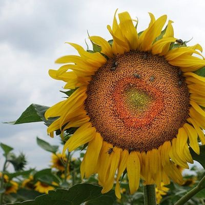 Biodynamic Gardening FREE Sustainable Living Workshop