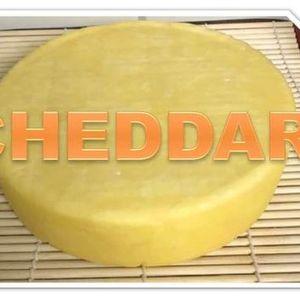 Cheesemaking - Cheddar