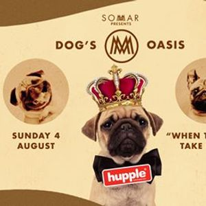 DOGs Oasis at SOMMAR
