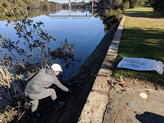 Parramatta Riverkeepers Clean Up Rydalmere Wharf