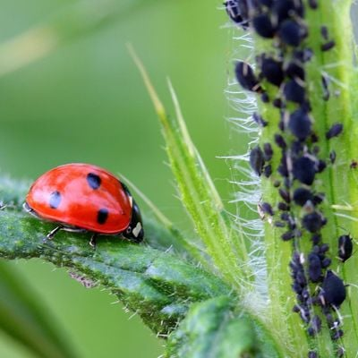 Biorational Pesticides Eco-Friendly Pest Control (webinar)