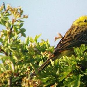 Birdwatching Classes wetland woodland and farmland birds
