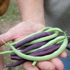 Gardening 101 (various herbs & veggies)