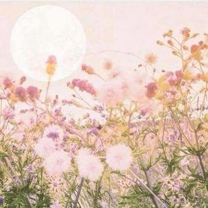 Sacred Sisterhood - Full Moon Meditation