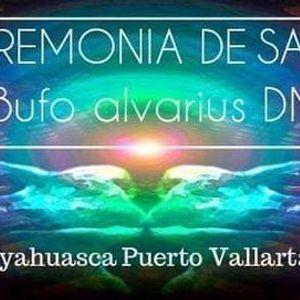 Ceremonia de Sapito Bufo Alvarius DMT