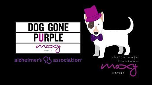 Dog Gone Purple