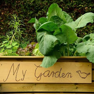 Edible Gardening Series Fertilizing Your Garden Topic 9 of 10 (webinar)