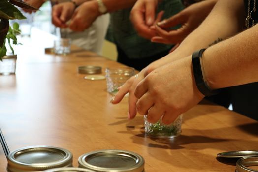 Camp Herbal Adventures (Ages 6-9)