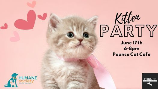 Kitten Party at Pounce Cat Cafe, 17 June   Event in Savannah   AllEvents.in