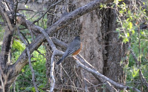 Guided Texas Bird Walking Workshop | Event in San Antonio | AllEvents.in
