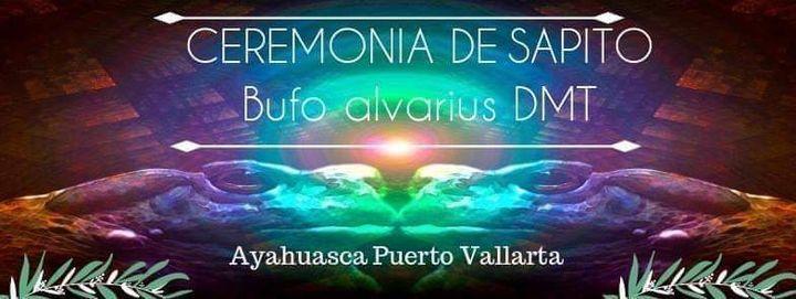 Ceremonia de Sapito Bufo Alvarius DMT, 26 February | Event in San Blas | AllEvents.in
