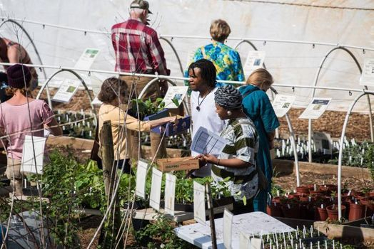 Fall Plant Sale & Festival | Event in Chattanooga | AllEvents.in