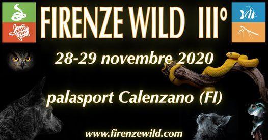 Firenze Wild III