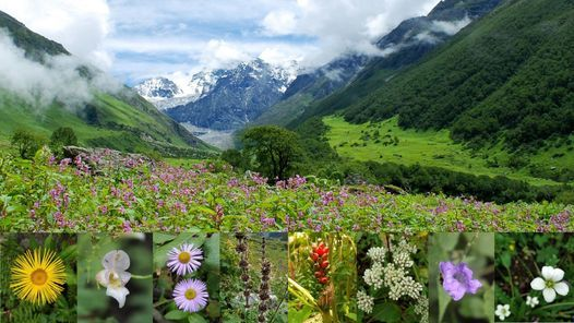 Trek to Valley of Flowers and Hemkund Sahib, 14 August | Event in Mumbai | AllEvents.in