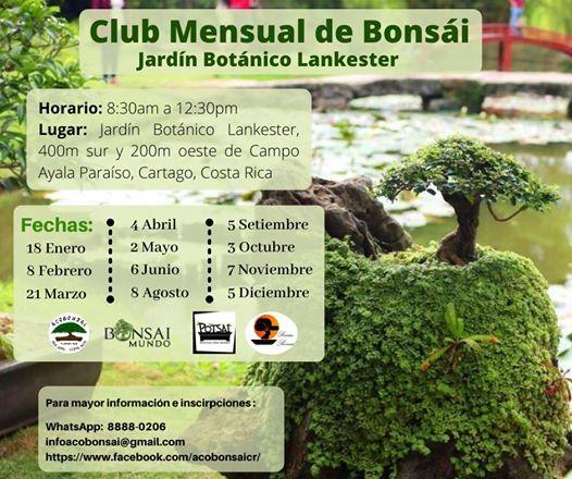 Club Mensual de Bonsi. Jardn Lankester.
