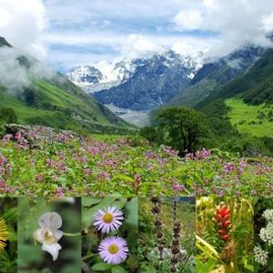 Trek to Valley of Flowers and Hemkund Sahib