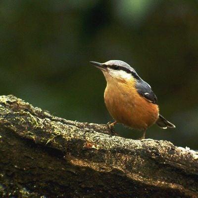 Birdwatching Classes woodland birds