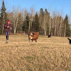 Virtual Fresh Air Trail Run 6