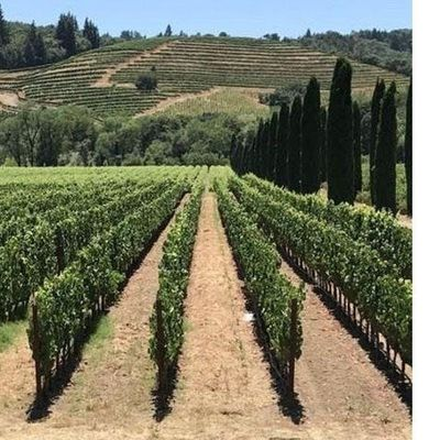 The Great Wine Tour (12-08-2019 starts at 800 AM)