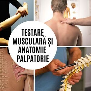 Testare muscular i anatomie palpatorie