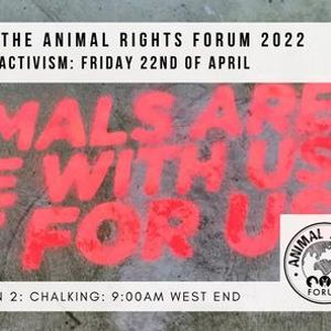 Animal Rights Forum Day of Activism Action Two Chalking