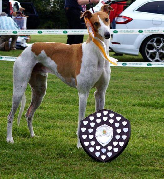 Annual Fun Dog Show Pulloxhill