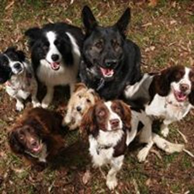 Austins' Dog Training Education