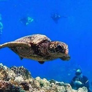 Reef and Dolphin Snorkel (2019-12-08 starts at 830 AM)