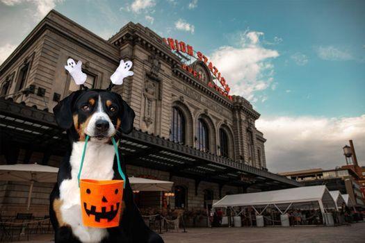 Dog with halloween constume