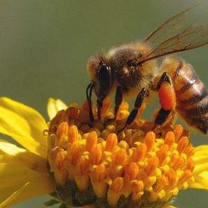 Ask a Beekeeper