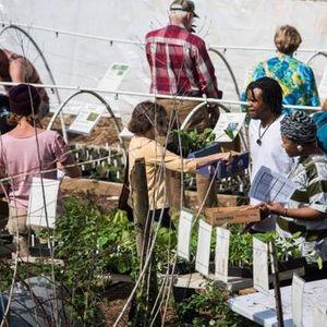 Fall Plant Sale & Festival