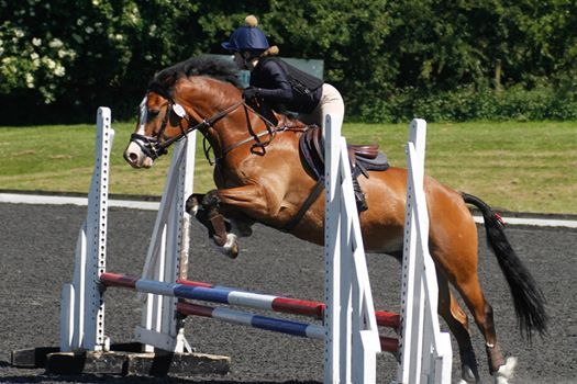 NSEA Show Jumping Qualifier for National Championships