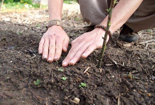 Initiation  la permaculture