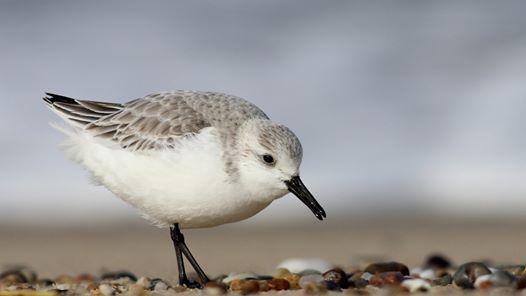 Three Billion Birds Lost Free talk with Kenneth Rosenberg