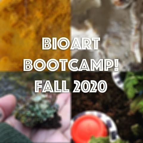 Physarum Encounters Workshop 6 of the BioArt Bootcamp Series, 22 November | Online Event | AllEvents.in