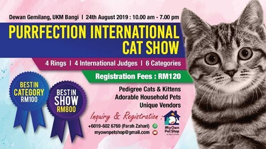Cat show events in the City  Top Upcoming Events for cat show