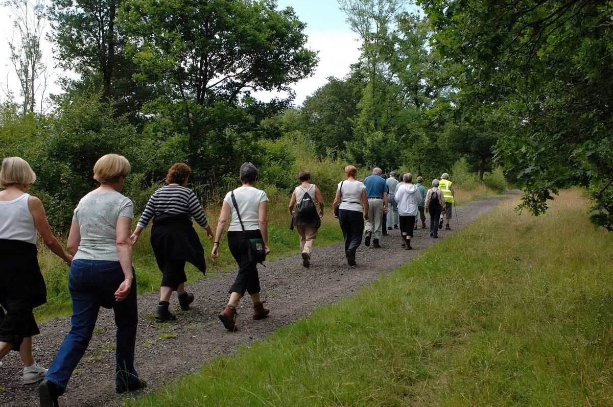 Sherwood Forest Habitats -  A Guided Walk - Edwinstowe Library - CL, 17 December | Event in Mansfield | AllEvents.in